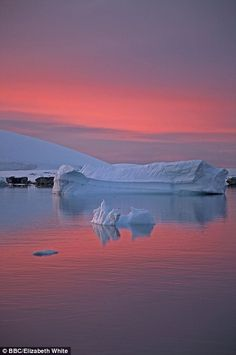 Sunset by Elizabeth White, BBC: The sky over the Arctic peninsula turns a deep shade of pink as the day draws to a close. via dailymail Beautiful World, Beautiful Images, Whale Pictures, Arctic Ice, Nature Scenes, Amazing Nature, Nature Photography, Photography Tips, Portrait Photography