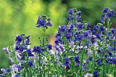 Pölcz Klaudia - kisklau: Varázslatos virágok