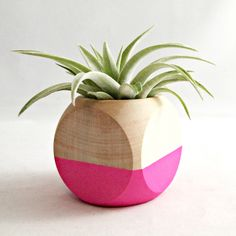 Color blocking isn't just for people; plants can get in on the action as well. Crafted specifically for air plants, this cube planter has been hand-painted with a striking fluorescent pink paint for a look that is both rustic chic and modern. Each planter comes with a single Tillandsia ionantha plant that blushes a pleasant reddish pink in bloom.