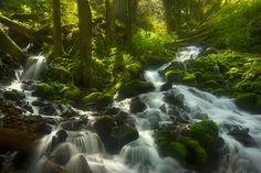 Enchanted Forest Columbia Gorge Oregon by MARC ADAMUS  (YellowKorner Basel & Zürich,galerie.basel@yellowkorner.com, galerie.oberdorf@yellowkorner.com)