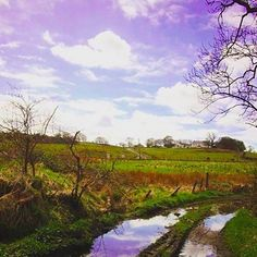 Quick leg stretch between #paintingsessions #landscape #puddles #track #narrativeclip #spring via @julie_arbuckle_scottish_artist by narrativeclip