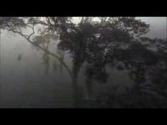 Comptine d'un autre ete : L'apres midi by Yann Tiersen - Soundtrack from Amélie (Planet Earth Video)