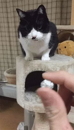 Funny cute cats, cute funny animals, funny animal pictures, all about cats Funny Cute Cats, Cute Funny Animals, Funny Animal Pictures, I Love Cats, Crazy Cats, Cat Memes, Memes Humor, Cat Gif, Cats And Kittens