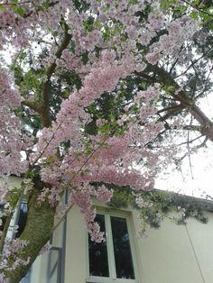 Primavera Berlim