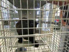 For more information about this animal, call: Oklahoma City Animal Shelter at (405) 297-3100  Ask for information about animal ID number A143013