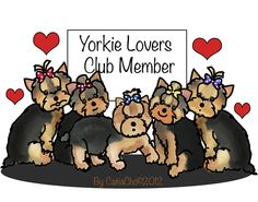 Image from http://images.fineartamerica.com/images-medium-large/yorkie-lovers-club-member-catia-cho.jpg.