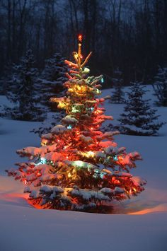Image from http://images.fineartamerica.com/images-medium-large/christmas-tree-with-lights-outdoors-in-carson-ganci.jpg.
