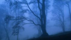 Las, Zmierzch, Mgła