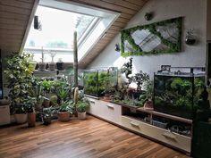 Marvelous Indoor Garden Design Ideas To Freshen Your Home Earthy Home Decor, Diy Home Decor, Room Decor, Indoor Garden, Home And Garden, Indoor Greenhouse, Balcony Garden, Herb Garden, Interior Exterior