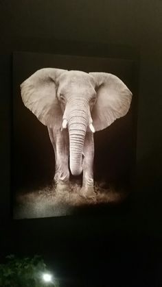 Elephant, Space, Animals, Display, Animales, Animaux, Animais, Elephants, Animal