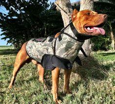 hog dog vest   WE'RE ALL ABOUT HOG DOGGIN!
