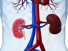 Kidney function can be estimated more precisely by measuring blood levels of both creatinine and cystatin C than by using either marker alone, a new study found. The technique could help doctors more accurately diagnose chronic kidney disease. #NIH Research Matters, July 16, 2012