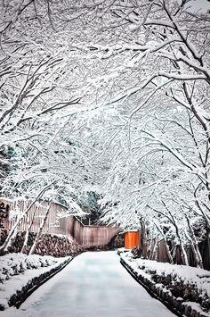 Snow on Toufuku-ji Temple path, Kyoto Japan