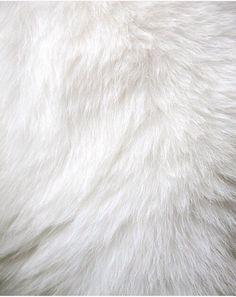 Imagen de white, fur, and background