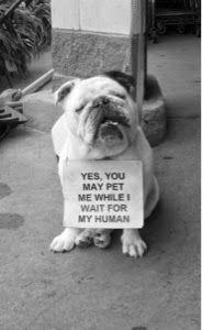 Humorwood®: Pet me!