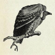 Vulture tattoo | Tattoos, Tattoos with meaning, Animal tattoos