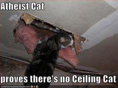 atheist cat
