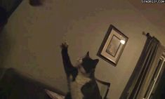 New trending GIF on Giphy. cat fist bump pound it. Follow Me CooliPhone6Case on Twitter Facebook Google Instagram LinkedIn Blogger Tumblr Youtube
