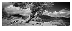 A series of panoramic landscape photographs taken with the iconic Hasselblad XPan camera.