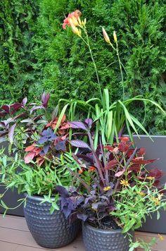 A Manhattan-Style Rooftop Garden - Garden Design Plant Design, Garden Design, Miscanthus Morning Light, Emerald Green Arborvitae, Ferns Garden, Heuchera, Rooftop Garden, Deciduous Trees, Tropical Plants