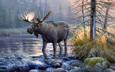 moose pictures | Awesome Moose wallpaper | Moose wallpapers