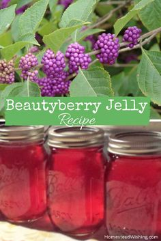 Check out this beautyberry jelly recipe. You might just find this bush in your backyard!