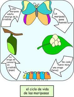 ciclo de vida:  las mariposas                                                                                                                                                                                 Más