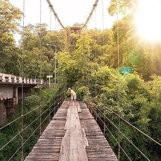 @luke_asper shares with us the story behind this image.  I recently went on a trip to Chiang Mai Thailand with a group of @gwstudents to help out in orphanages up in the mountains of northern Thailand. While we were up in the mountains exploring when we came across this abounded bridge and had to cross it! The sun light that was coming through the trees was incredible and #LensDistortions help bring out the look and feel that I felt while I was taking the photo! Truly a unforgettable moment…