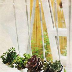 Um dos mais lindos enfeites de janela de cozinha. As suculentas enfeitam e não precisam de muitos cuidados. Plantá-las em conchas deixa sua cozinha um charme!  #decoração #conchas #suculentas #utensíliosdecozinha #plantas #inspiração #cozinha #janela #lardocelardaliblog
