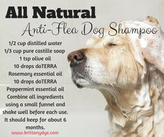 I am so excited to try this anti-flea dog shampoo. Not so much for the fleas, because that's not an issue for us, but so that my dog can have natural products. **Order your own doTERRA essential oils here