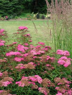 Extend the gardening season with this list of herbaceous perennials, shrubs and trees with autumn interest.