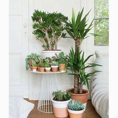 Jardin d'intérieur : nos coups de cœur repérés sur Pinterest