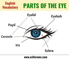 Parts of the Eye: Learn Different Eye Parts with ESL Picture! - ESL Forums