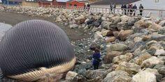 Balena arenata in spiaggia spaventa i turisti | Può esplodere | Video