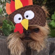 When your hoomin dresses you up for #Thanksgiving... Dress your pet up too! - http://www.entirelypets.com/holidaystore.html?filter&categories=holiday-clothing?utm_source=facebook&utm_medium=web&utm_campaign=epfbpostproduct (via ig: punkyroodesigns)