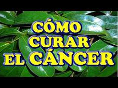 ❤ Como Curar el Cáncer de Mama, Colon, Próstata, Hígado, Riñón, Páncreas, y otras Enfermedades - YouTube