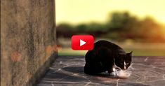 Feline Diabetes Awareness Is So Important! Learn The Symptoms In This Music Video | The Animal Rescue Site Blog