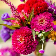 Key September Flower: Zinnia