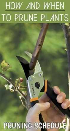 Download this pruning schedule for your garden plants.