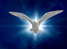"""""""Come Holy Spirit. Come Holy Spirit. It's the most fundamental of prayers. You can even ask the Holy Spirit to tell you what you need and how to pray for Dove Pictures, Jesus Pictures, Dove Images, Catholic Pictures, Santa Paloma, Holy Spirit Come, Holly Spirit, Image Jesus, Première Communion"""