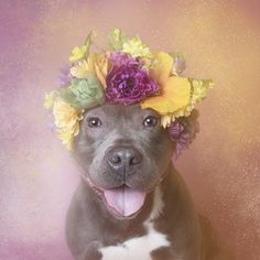 KARMA - Brookhaven Animal Shelter (LI) is available for adoption. Go to article and see link for those dogs that are still waiting. Love the pix.
