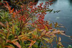 illo_ephem_heavenly_bamboo | Sun Yat-Sen Garden, Sigma DP1 M… | Flickr