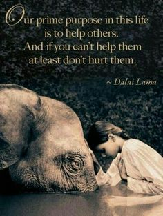 Our prime purpose in this life is to help others ~ And if you can't help them, at least don't hurt them ༺❁༻ Dalai Lama