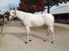 Not many more beautiful than G1 winner Egg Drop, selling in foal to Tapit today at #KeeNov