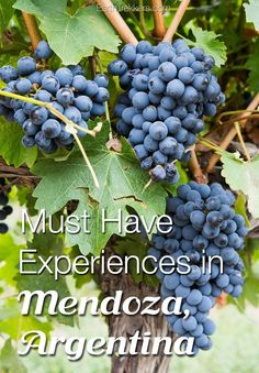 Best Things to do in Mendoza, Argentina. Wine tasting, whitewater rafting, horseback riding, and Aconcagua National Park all make the list. Visit Colombia, Visit Argentina, Argentina Travel, Mendoza, Argentina Culture, Whitewater Rafting, South America Travel, Best Hikes, Wine Tasting