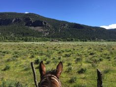 A Dude Ranch Review: Southern Colorado's Rainbow Trout Ranch - La Nouba