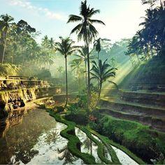 Tegalalang - Bali