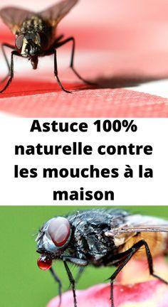 Epingle Par Momo Sur Astuce Contre Les Mouches Mouches Astuces