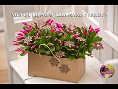 KARBONAT İLE ORKİDE BAKIMI (CARBONATE OR ORCHID CARE)!!!! - YouTube
