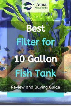 Responsible Care for Freshwater Fish Aquarium Tropical Fish Aquarium, Tropical Fish Tanks, Nano Aquarium, Freshwater Aquarium Fish, Aquarium Design, Aquarium Ideas, Nano Reef Tank, 10 Gallon Fish Tank, Goldfish Tank